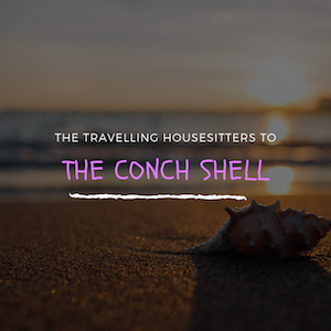 Everything You Should Know About The Conch Shell Before going to The Bahamas