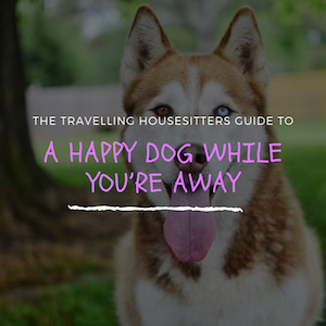 How to Ensure a Happy Dog When You're Away
