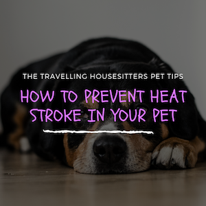 How to Prevent Heat Stroke in Your Pet This Summer