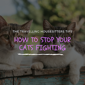 How to Stop Your Cats Fighting