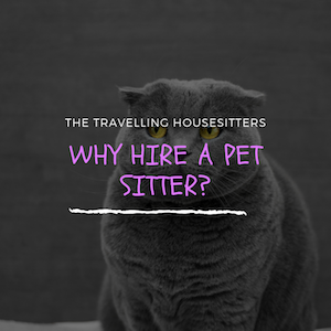 Why Hire A Pet Sitter?