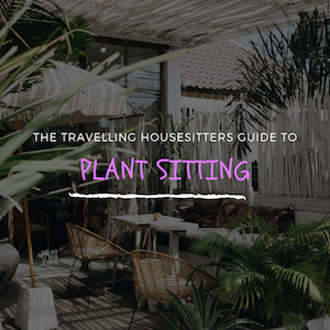 Plant Sitting Tips: A Simple Guide to Looking After Indoor Plants