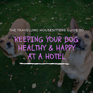 Keeping Your Dog Healthy and Happy During a Hotel Stay