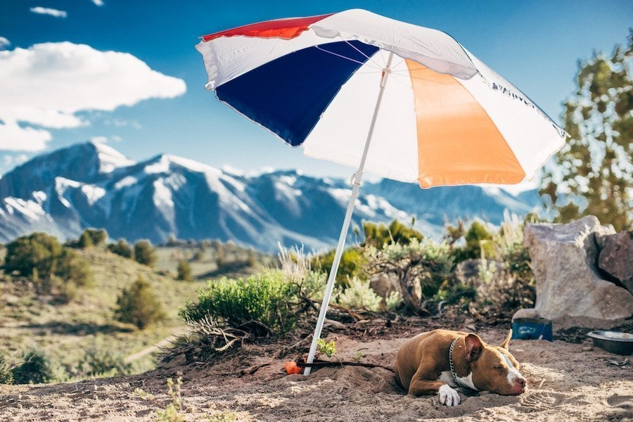 How To Prevent Heat Stroke In Pets