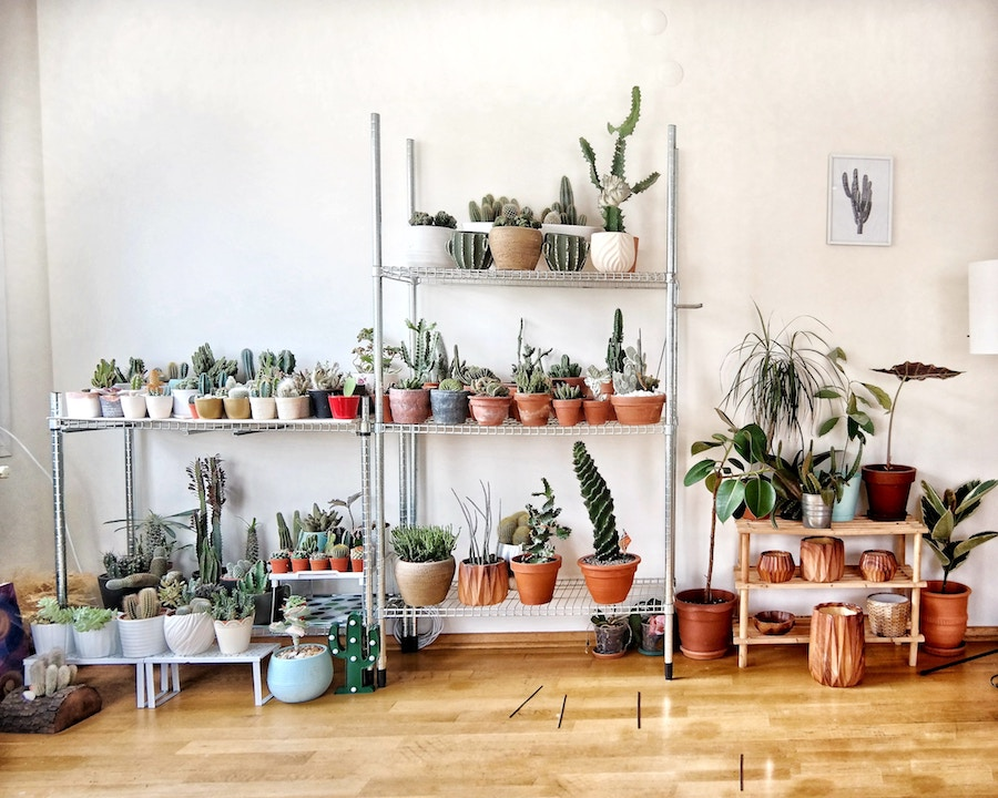 Plant Sitting Tips
