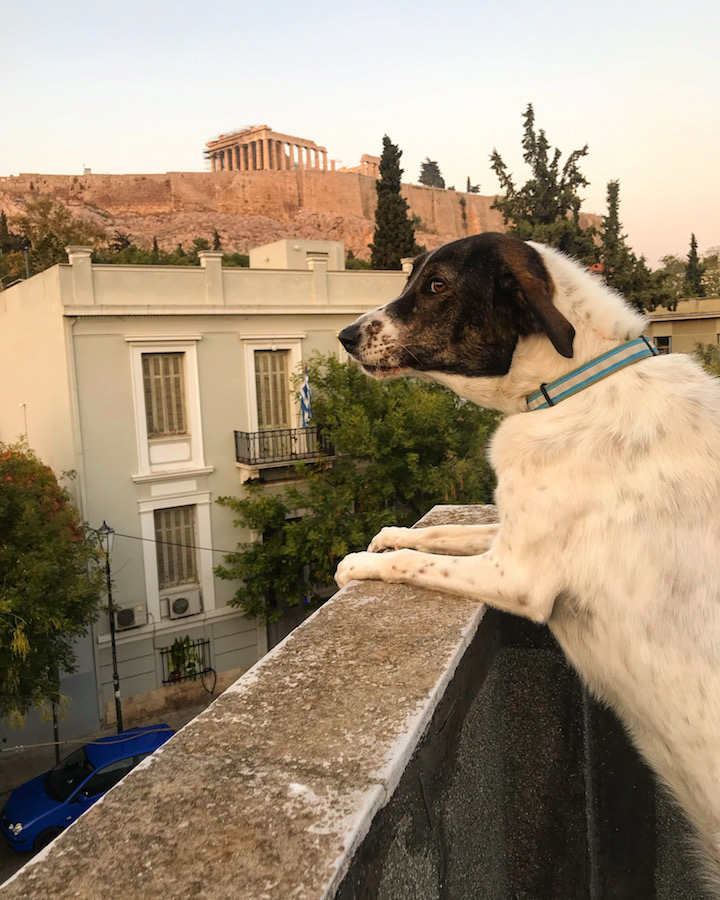 House Sitting in Athens, Greece