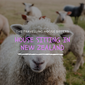 House Sitting in New Zealand Experience